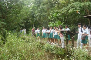 MangroveTrail-06