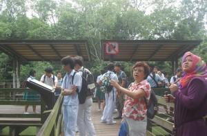 MangroveTrail-09